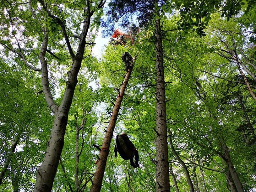Cztery akcje GOPR; paralotniarz zawisł na drzewie /Grupa Podhalańska GOPR /facebook.com