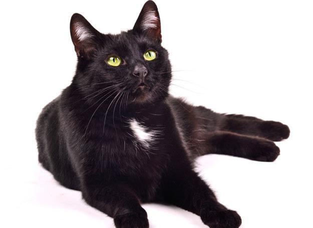 Czy czarny kot przynosi pecha?  /© Panthermedia