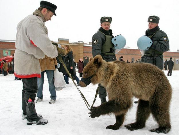 """Czy da się polubić """"ruskiego"""" niedźwiedzia? /AFP"""