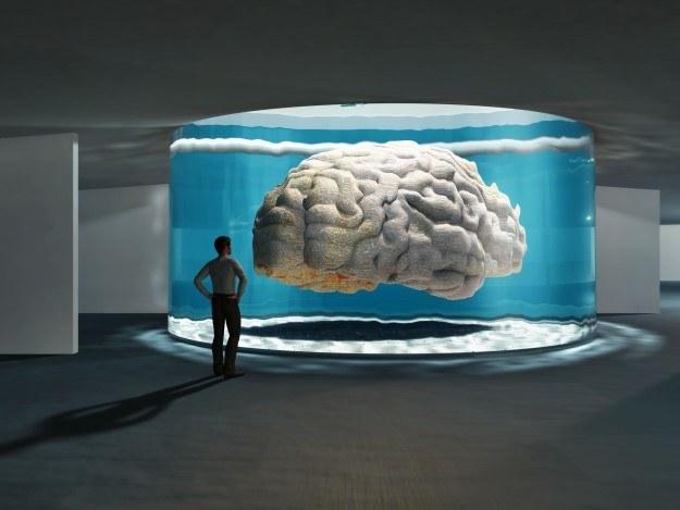 Czy da się wyhodować pełnosprawny, czujący i myślący mózg? /123RF/PICSEL