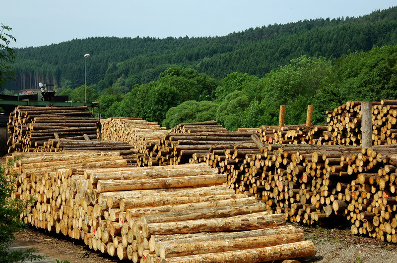 Czy drewno będzie masowo pozyskiwane do spalania? /© Panthermedia