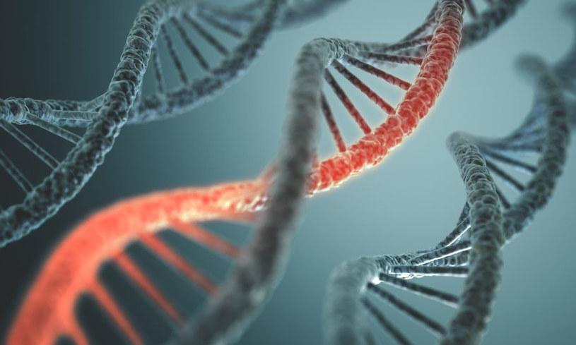 Czy dzięki edycji genów Chińczycy wkrótce będą leczyć raka? /123RF/PICSEL