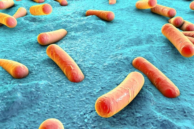 Czy dzięki starożytnym bakteriom uda się stworzyć lepsze antybiotyki? /123RF/PICSEL