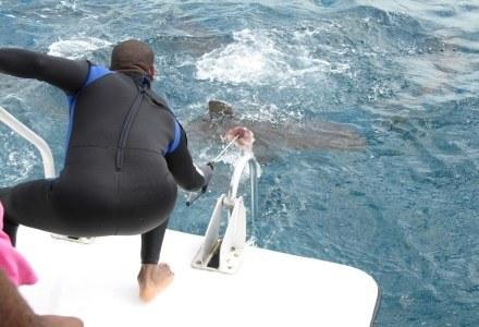 Czy filmiki z atakującymi rekinami są prawdziwe? Wirtualna (nie)prawda szuka odpowiedzi. /materiały prasowe