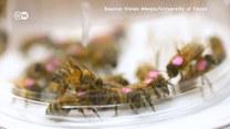 Czy glifosat zabija pszczoły?