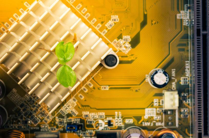 Czy kiedyś uda się połączyć rośliny z elektroniką? /123RF/PICSEL