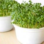 Czy kiełki brokuła mogą oczyszczać organizm?