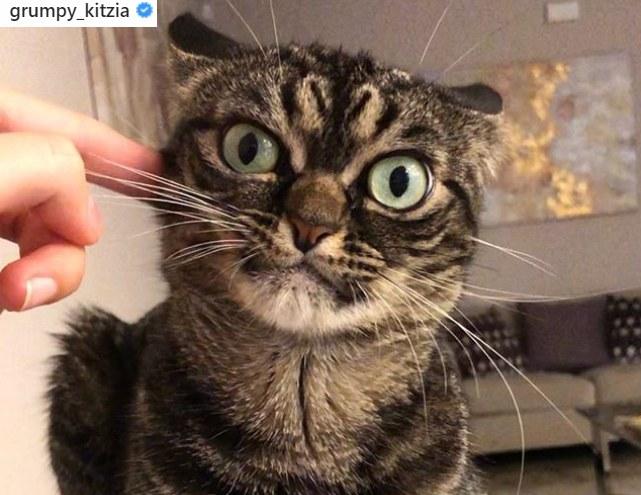 Czy Kitzia zrobi karierę na miarę Grumpy Cata? /Instagram