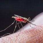 Czy komary stają się coraz bardziej niebezpieczne?