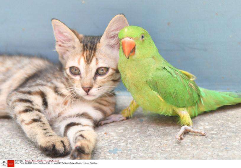 Czy kot i papuga to dobre połączenie? /Shaukat Ahmed/Pacific Press/Shutterstock /East News