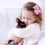 Czy królik to dobry prezent dla dziecka?