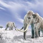 Czy ludzie dadzą radę wskrzesić mamuty?
