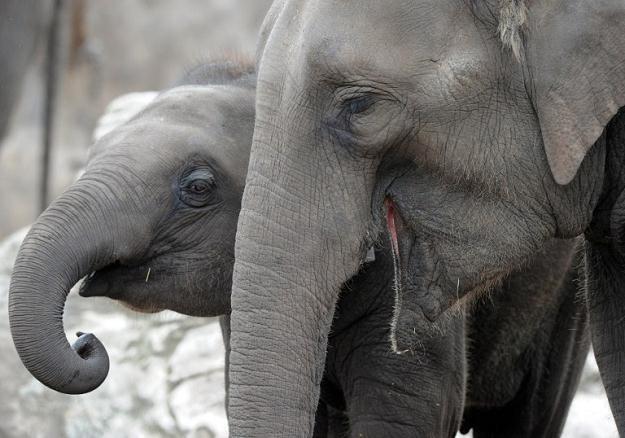 Czy możemy uznać, iż zwierzęta posiadają wiarę? /AFP