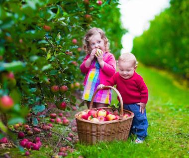 Czy można jeść warzywa i owoce prosto z krzaka?
