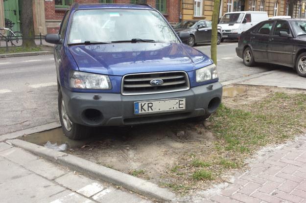Czy można karać za niszczenie nieistniejącej roślinności? /poboczem.pl
