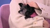 Czy można latać samolotem z psem na kolanach?