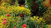 Czy nadajesz się na ogrodnika?