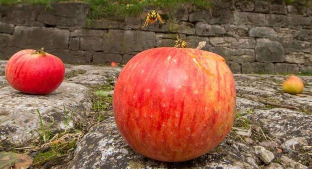 Czy nasze owoce są trujące? /AFP