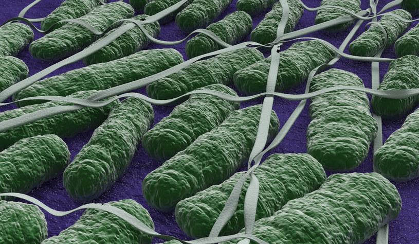 Czy niektóre bakterie Salmonella pomogą wyleczyć glejaka? /123RF/PICSEL