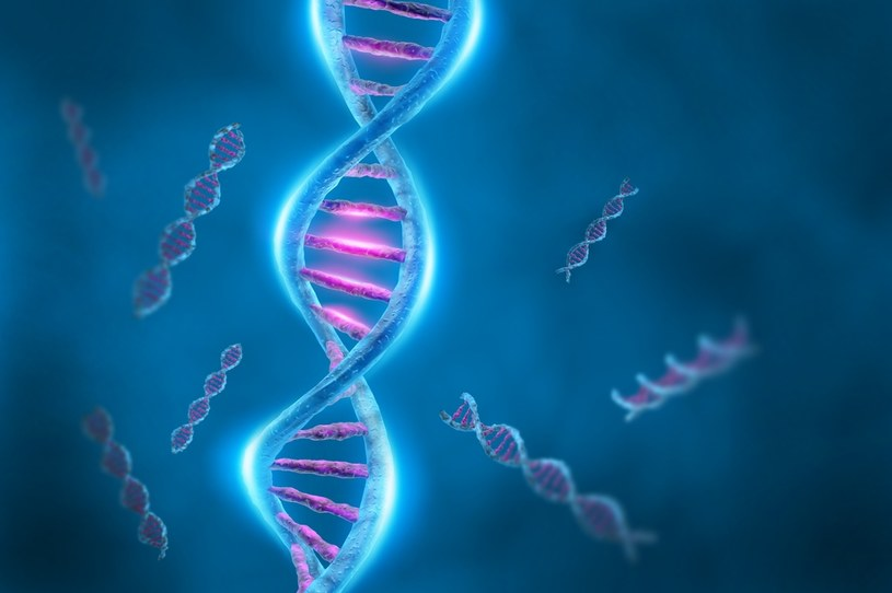 Czy otyłość jest zapisana w genach? /123RF/PICSEL