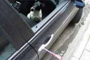 Czy pies może odstarszyć złodzieja? /INTERIA.PL