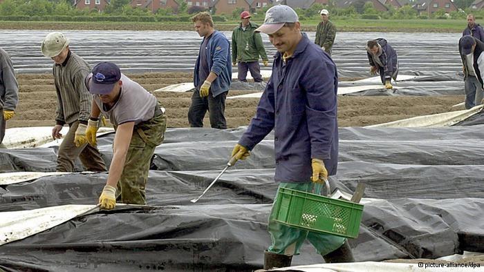 Czy płaca minimalna uderzy w pracowników sezonowych z Polski? /Deutsche Welle