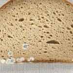 Czy pleśń na chlebie jest szkodliwa?