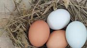 Czy polskie jaja są skażone?