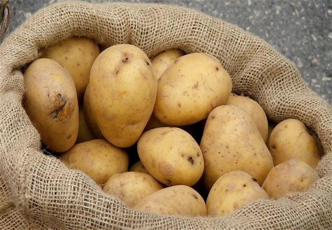 Czy przechowywać ziemniaki w lodówce /© Photogenica