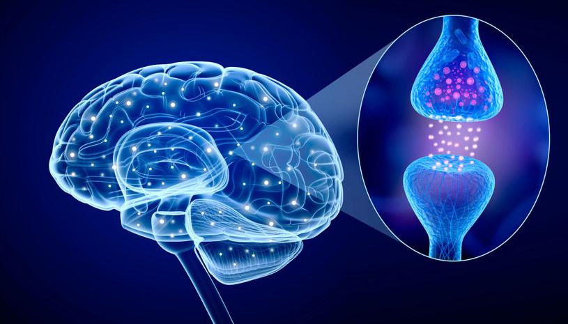 Czy stworzenie sztucznej synapsy to krok w stronę lepszej sztucznej inteligencji? /123RF/PICSEL