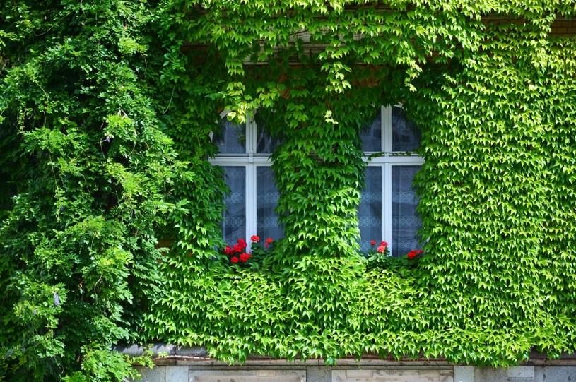 Czy tak wyglądać będą domy przyszłości? /123RF/PICSEL