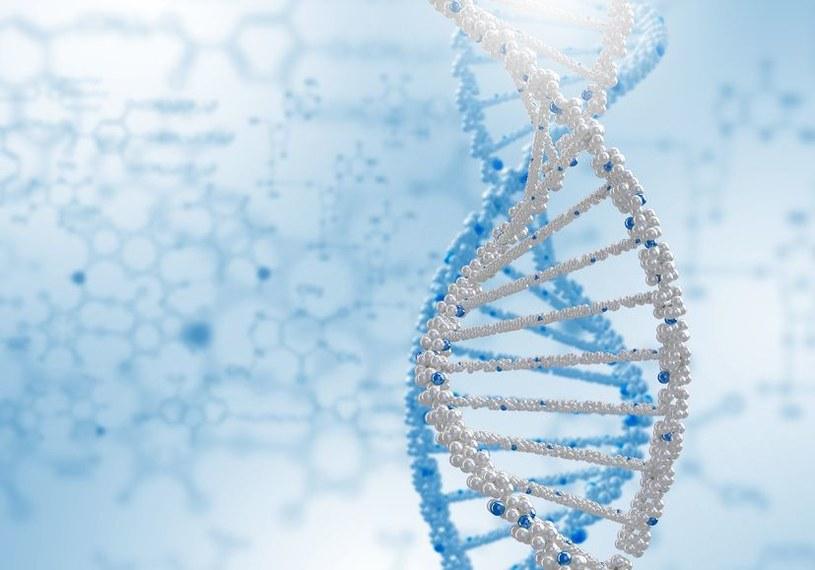 Czy telomery kryją klucz do nieśmiertelności? /123RF/PICSEL