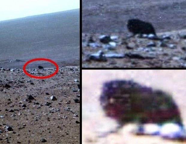 Czy to zdjęcie z Marsa przedstawia żywe stworzenie? /materiały prasowe