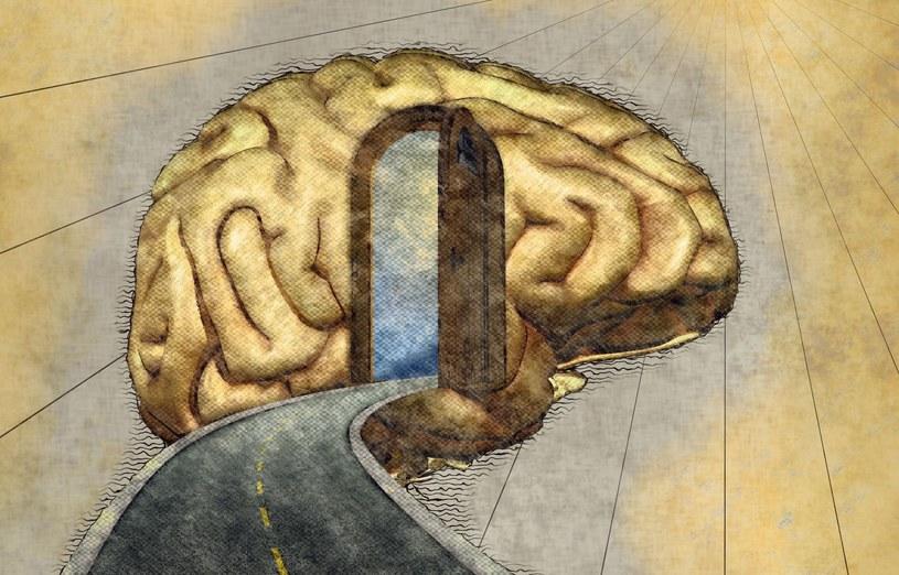 Czy tylko mózg tworzy umysł? /123RF/PICSEL