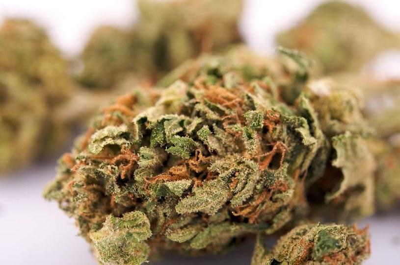 Czy użycie medycznej marihuany wkrótce będzie dozwolone w Niemczech? /123RF/PICSEL