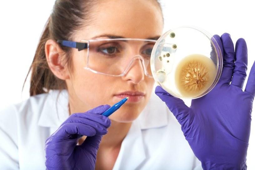 Czy wkrótce uda nam się pokonać lekooporne bakterie? /123RF/PICSEL