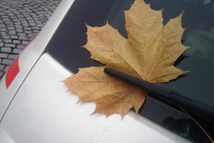 Czy wprowadzić na auta seniorów żółty, jesienny liść? /INTERIA.PL