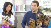 Czy York jest dobrym psem dla dzieci?