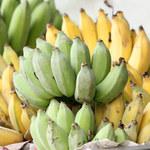 Czy za 10 lat nie będzie już bananów?