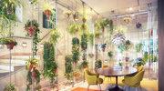 Czy zielone biuro, to zdrowe biuro?