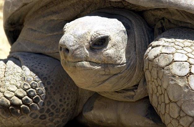 Czy żółwie kiedyś będą ratować ludzi? /AFP