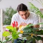 Czym czyścić liście roślin doniczkowych?