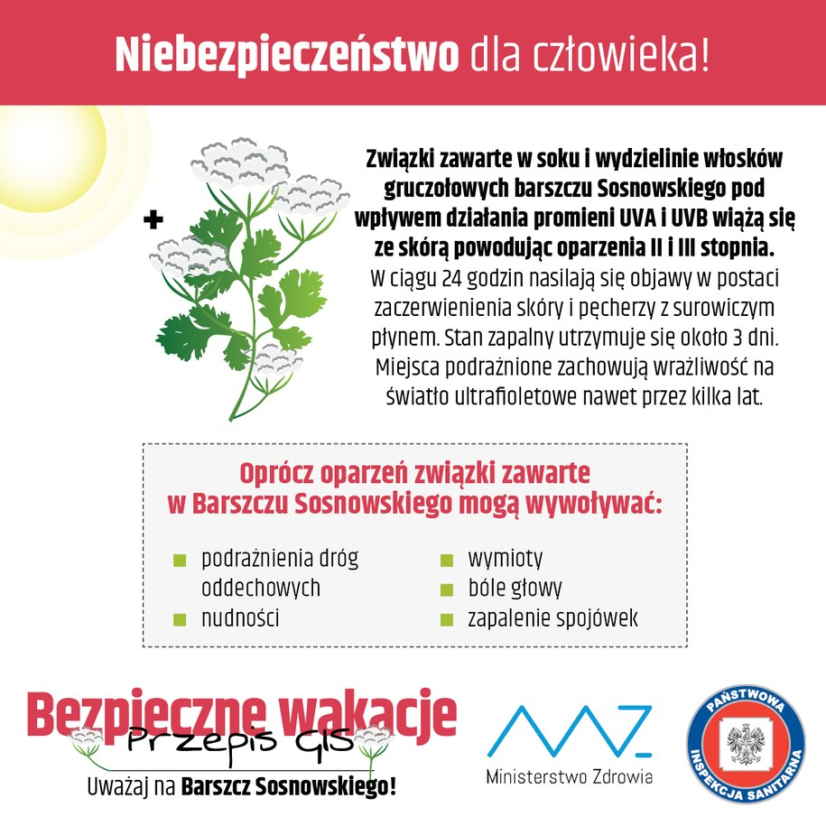 Czym grozi nam zetknięcie z Barszczem Sosnowskiego? /gis.gov.pl /