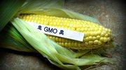Czym jest genetycznie modyfikowana żywność?