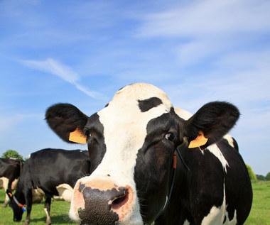 Czym jest nietolerancja laktozy i co zrobić, jeśli jesteśmy na nią skazani?
