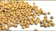 Czym jest soja GMO?