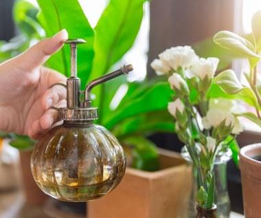 Czym najlepiej podlewać i nawozić kwiaty?