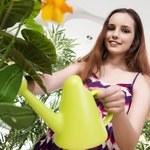Czym najlepiej podlewać rośliny doniczkowe?