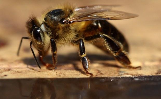 Czym zagrażają nam owady?