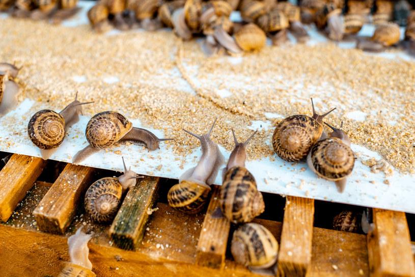 Czystość to kluczowe zadanie przy walce ze ślimakami /123RF/PICSEL